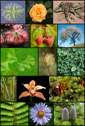Diversity_of_plants_image_version_5.png
